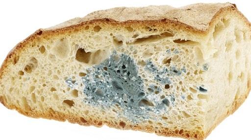 gli italiani non mangiano più il pane raffermo offerto dai Saviano